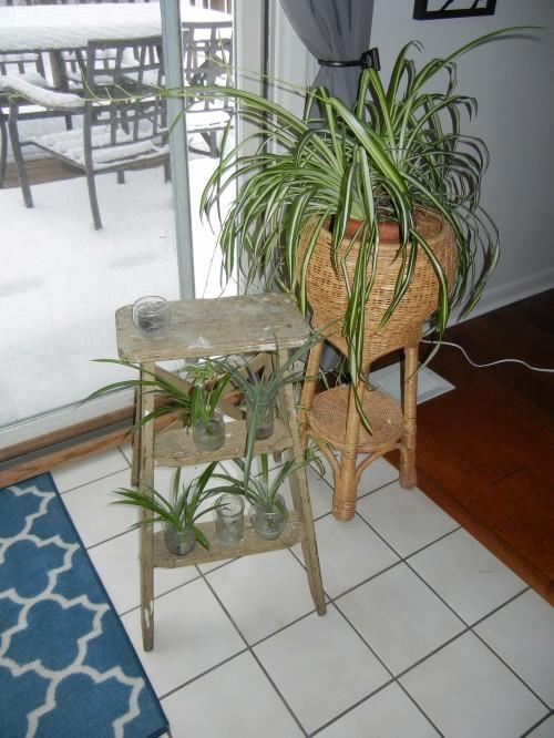 Plant Stepladder
